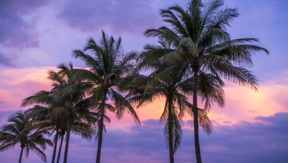 Miami palms at sunset