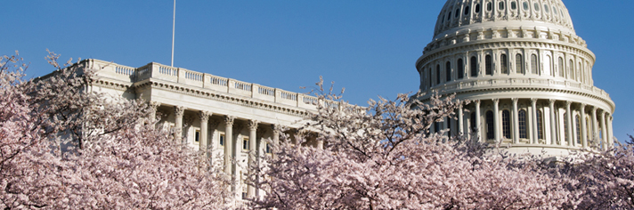 Washington DC Cherry Blossom Vacations