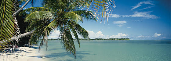 Florida Keys Beach with Palm Tree
